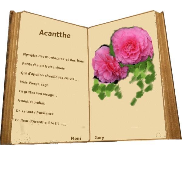 Acantthe