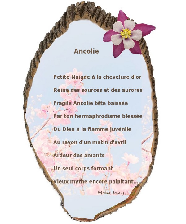 Ancolie 2