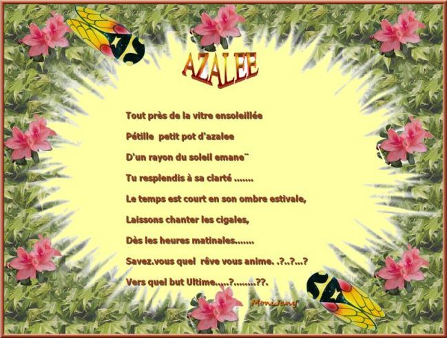 Azalee fin