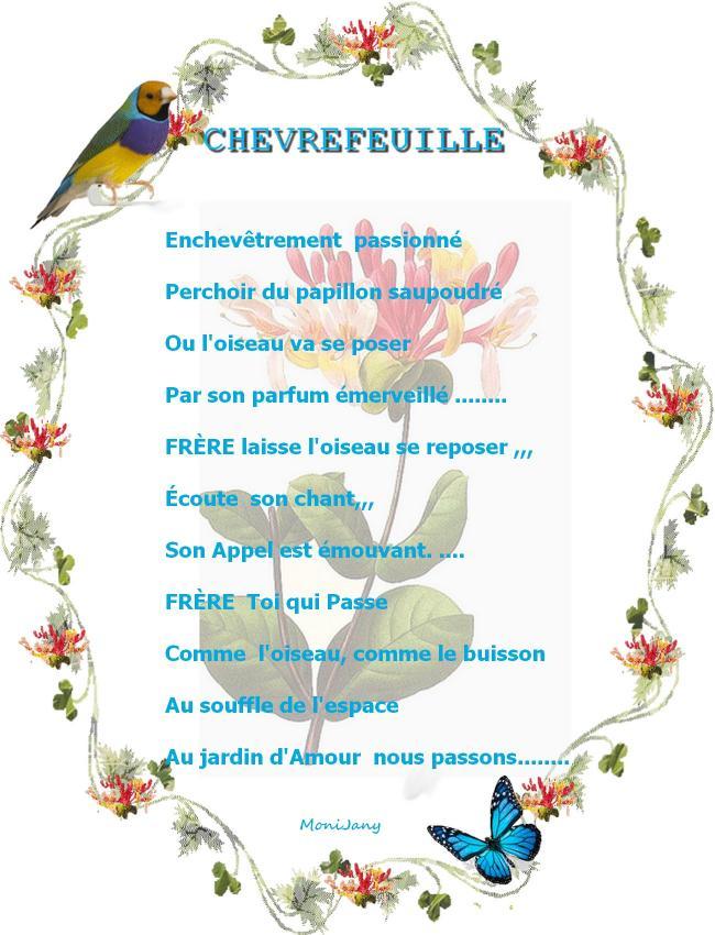 Chevrefeuille 2222222