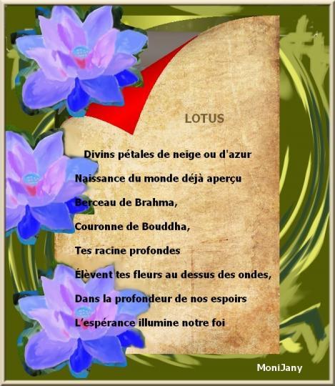 Papy lotus